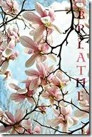 MagnoliaCard-breathe