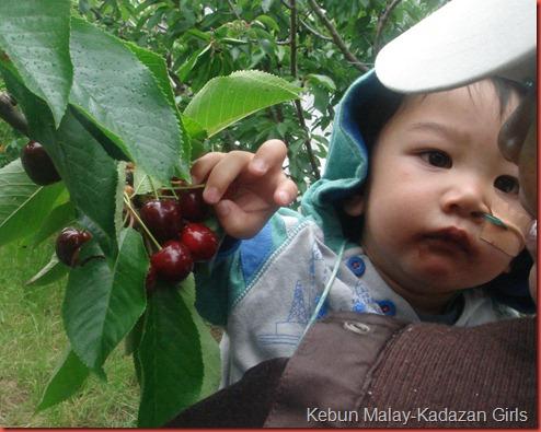 Cherry Picking (42)