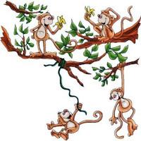Macacos C (21).jpg