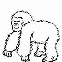 Macacos PB (4).jpg