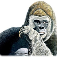 Macacos C (27).jpg