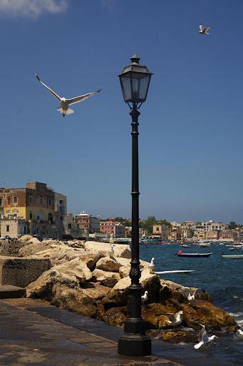 Италия Искья Чайки Italia Ischia Seagulls