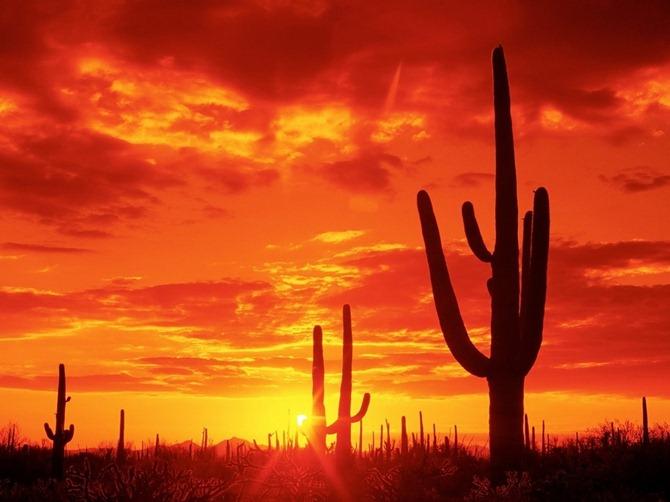 desierto_de_arizona1-681807