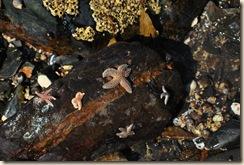 5 star fish on rock