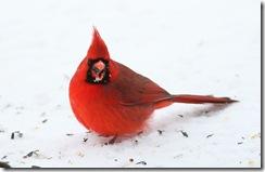 cardinal m