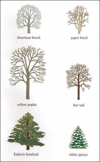 Tree Silhouette25