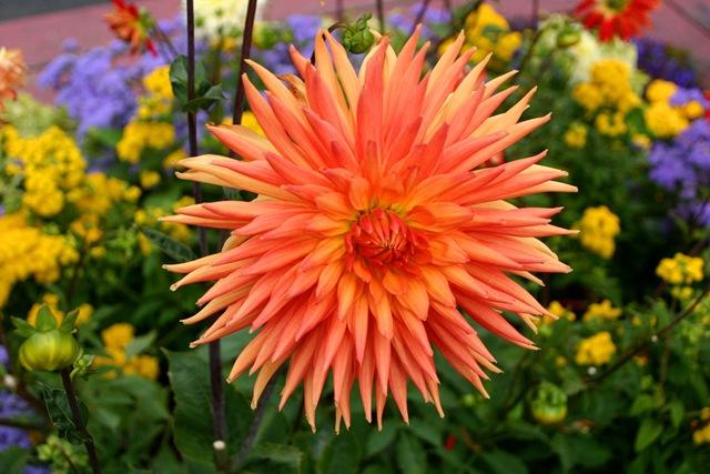 [star flower[4].jpg]