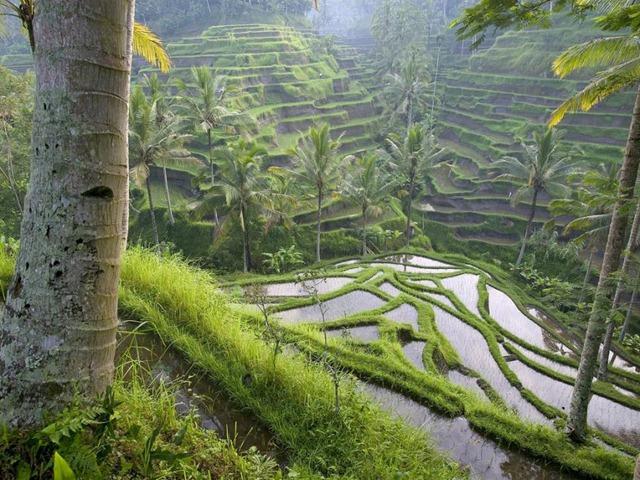[Bali[4].jpg]