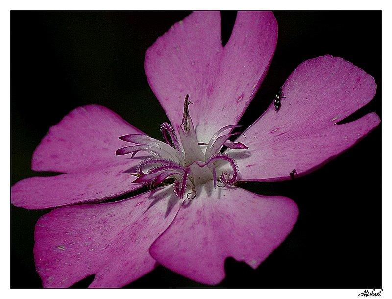 Photos sortie sur Perpignan du 11/06/2009 Fleur2