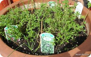 Herb pot 5 Sept