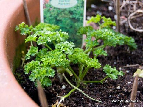 [17-03-parsley.jpg]