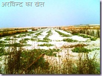 Arvind Farm width