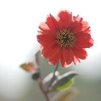 Bright-Red-1280x1024.jpg