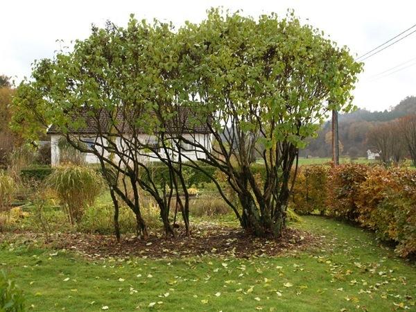 2010-10-30 Hagen (14)