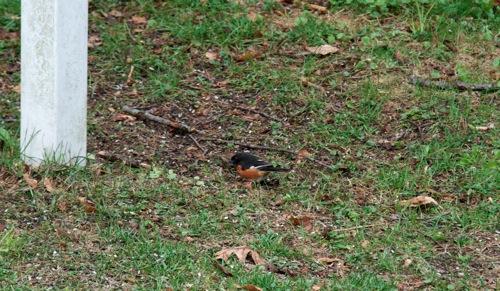 Bird5 051011