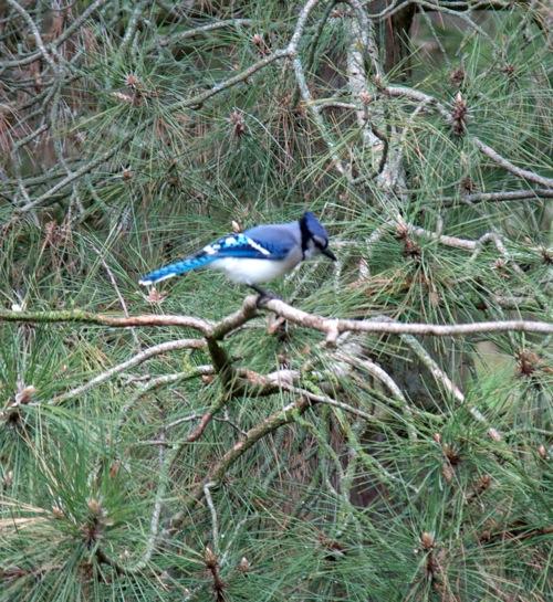 Birds6 051011