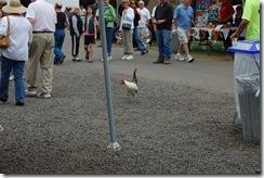 county_fair 125