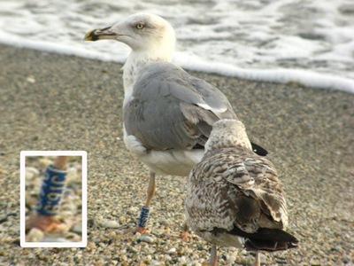 g91c 4-10-2010 Punta Blanca (detalle)