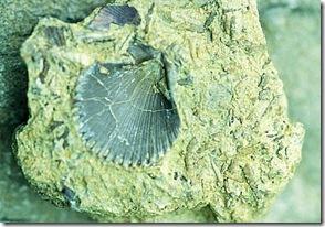 invertebrados fosiles