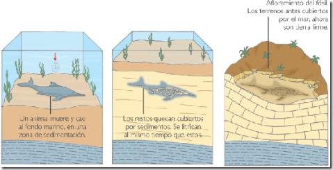 Resultado de imagen para fosilizacion