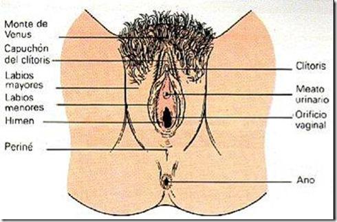 La Vulva - Ciencia Explicada