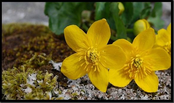 blom2