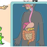 aparato-digestivo1.jpg