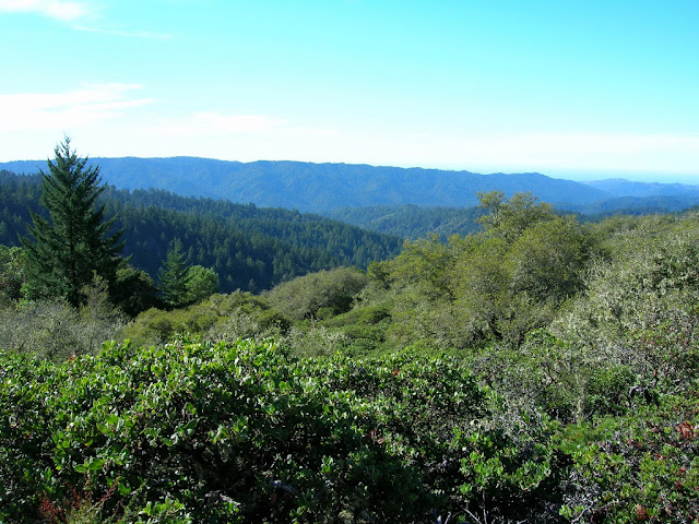 Butano Ridge from Achistaca Trail