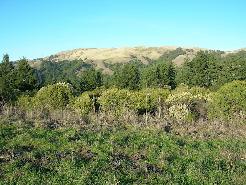 Looking toward Russian Ridge from the Mindego Trail