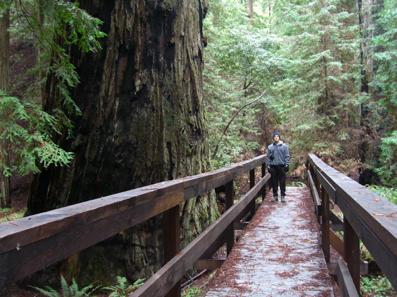 Me next on the bridge next to a large redwood