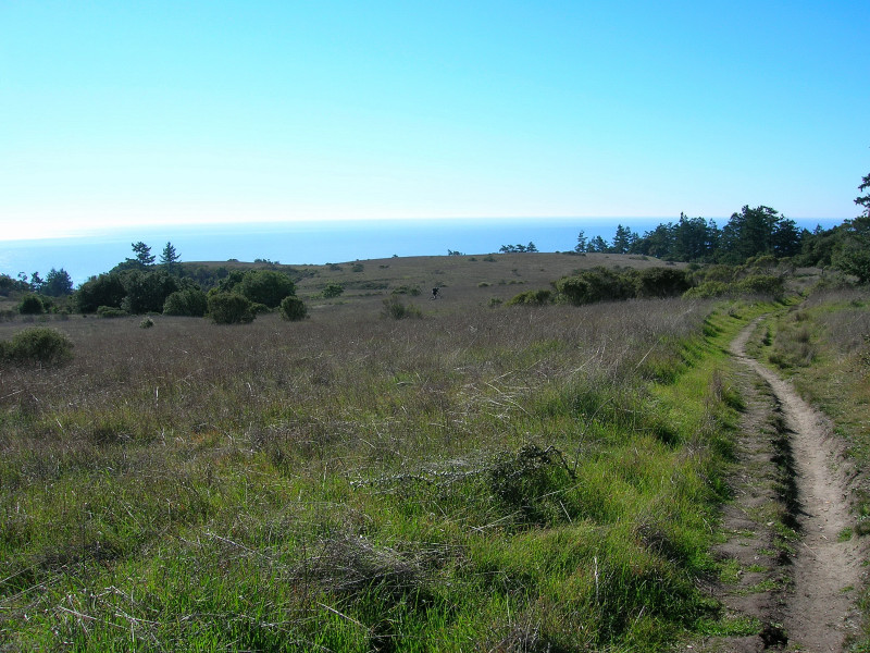 View of the Pacific Ocean from the Baldwin Trail