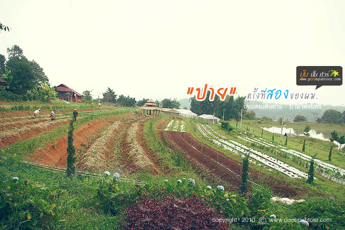 IMGP7527-s.jpg