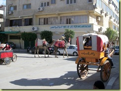 Camels and horses in the street