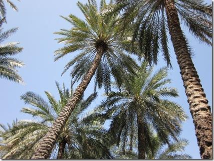 Oman Februarry 2011 019