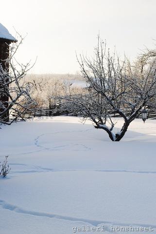 vinterbilder feb 2011 001