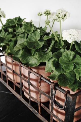 växter hemma 021