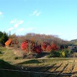 """八つの塚(小規模古墳)があることから名付けられた""""八塚ヶ谷"""" 民間のチカラで整備された紅葉公園は まさに""""もみじ祭り""""が行われていたばかり。見ごろだ。"""