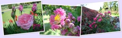Visualizza fleurs 2