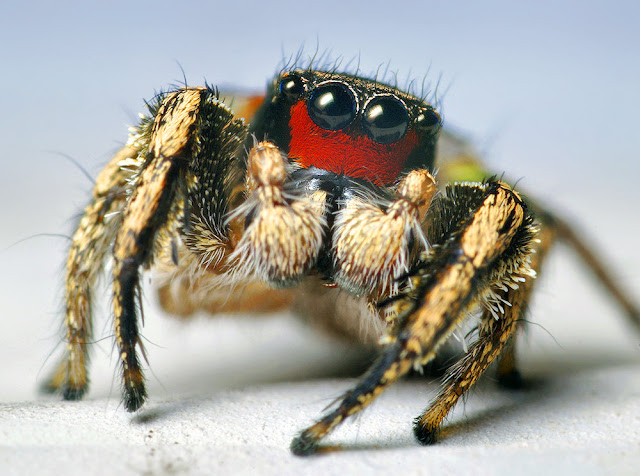 fotos de arañas
