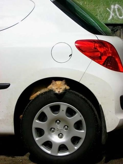 hummmm.... aqui há gato!