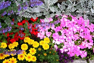 Flower_Colors