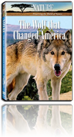 the wolf that change america