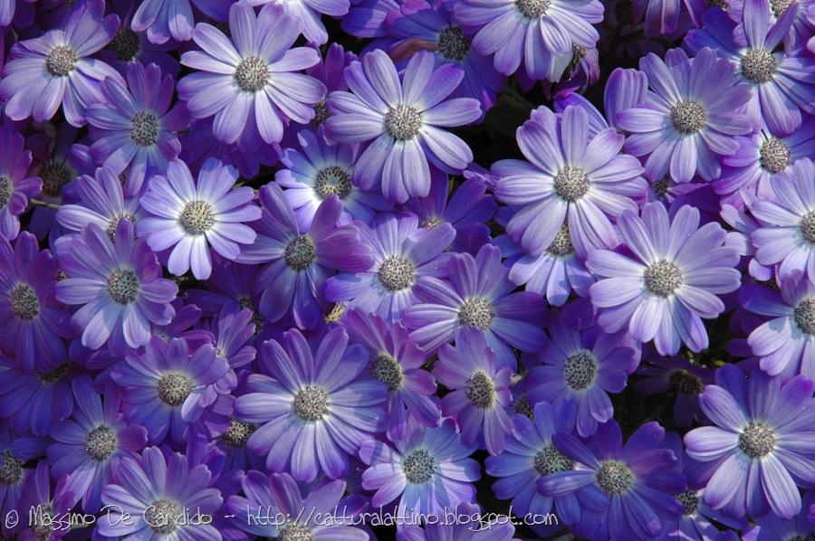 Pin hd due sfondo fiore viola backgrounds sfondi per il for Sfondi hd viola