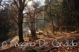 Bosco_Campo_dei_Fiori