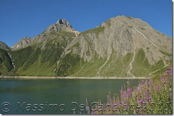 Lago_di_Morasco_fiori