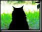 lonelyblackcat