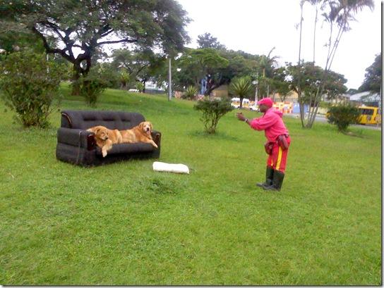 2011-04-26 Sofá com cães