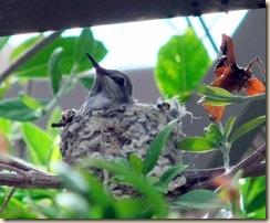 Baby hum 3-22-2010 11-08-31 AM 975x803