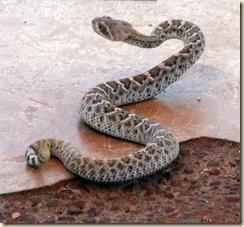 Snakey 8-27-2010 11-13-49 AM 3616x2712