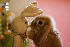 bunnykiss